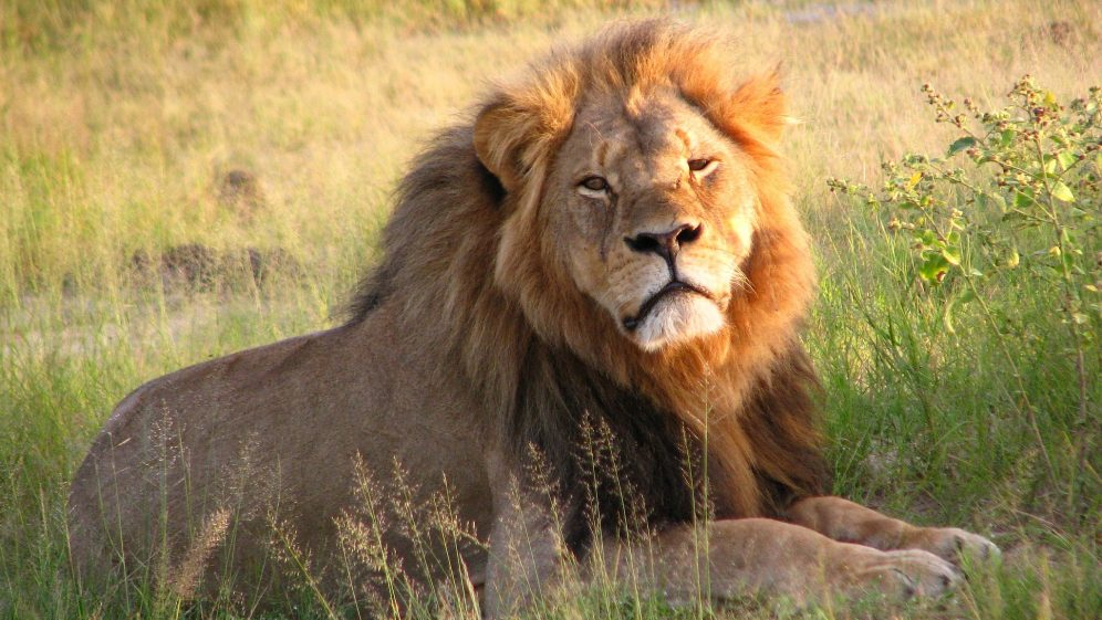 Storytime: The Lion's Whisker