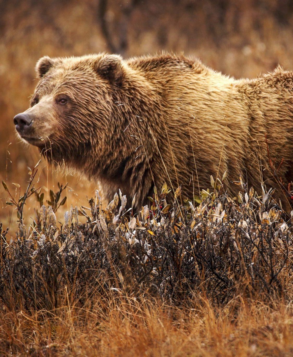 Storytime: The Bear