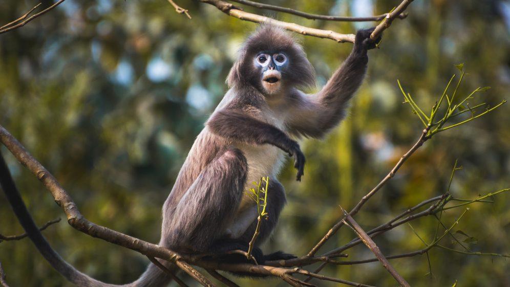 Storytime: I Want a Monkey